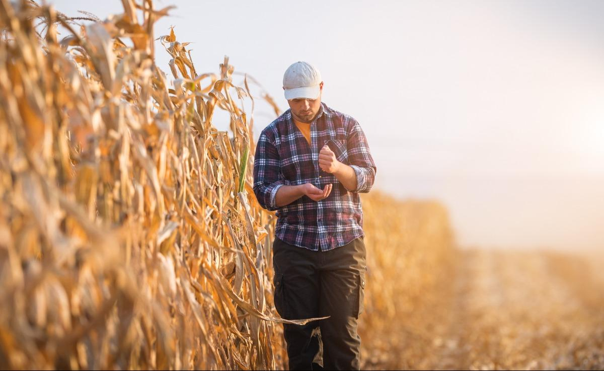 young farmer in corn field
